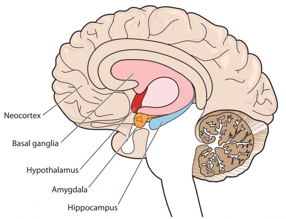"How PTSD affects brain ""circuitry"""